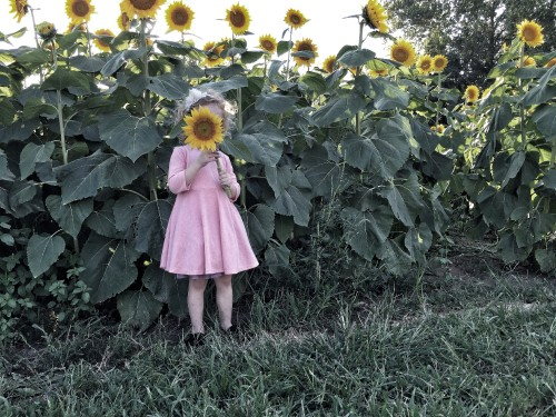 My daughter, standing before a field of sunflowers, held one up to her face. I snapped a quick photo before she pulled it down again.